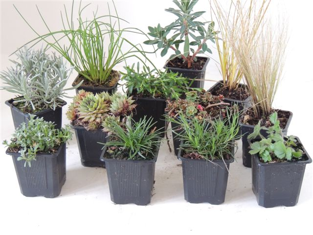Godets micromottes accueil for Catalogue de plantes vivaces